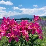 icon-https://www.netdepop.com/wordpress/wp-content/uploads/2020/09/Lake-Kawaguchi-4.jpg