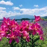icon-https://www.netdepop.com/wordpress/wp-content/uploads/2021/02/Lake-Kawaguchi-4-768x1024-1.jpg